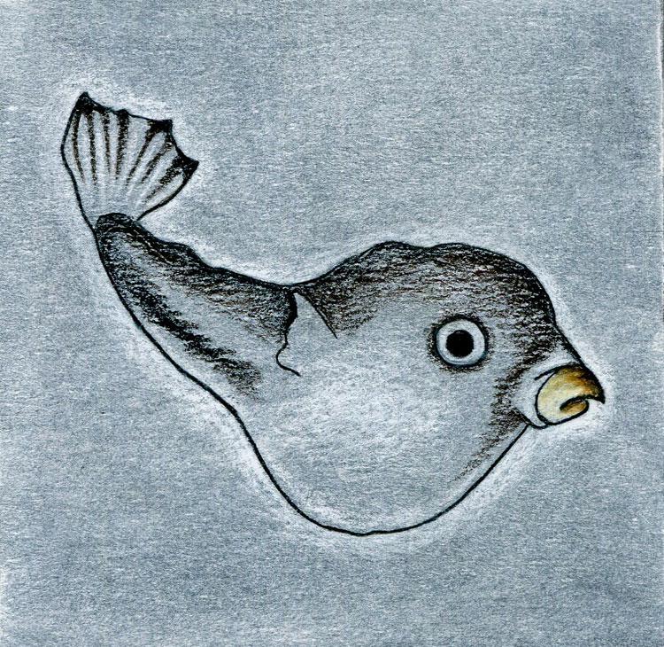 BlowfishWEB