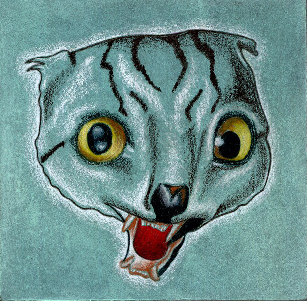 Cat JawWEB